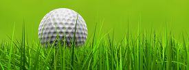 image of balls  - Green fresh natural 3d conceptual grass field on blur background with a white golf ball at horizon banner - JPG