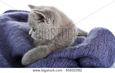 Cute gray kitten on warm plaid isolated on white