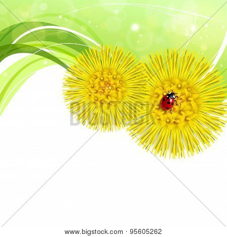 Spring Floral Background With Coltsfoot