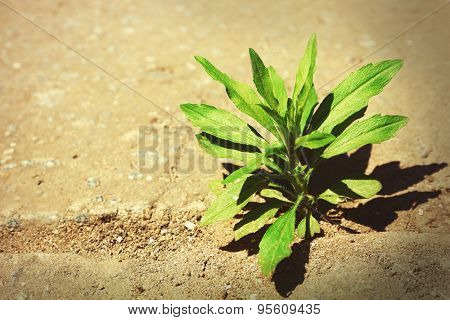 Plant growing through pavement