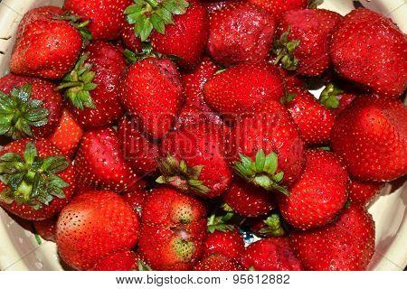 Ripe Strawberries.