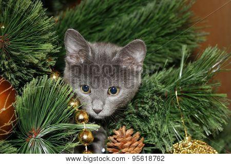 Cute kitten climbed on the tree