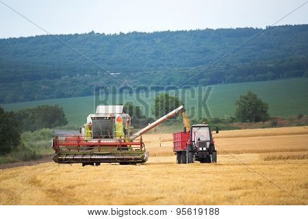 Working Harvesting Combine In The Field Of Wheat