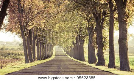 Road Running Through Tree Alley.