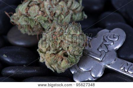 F.I. Medicinal Medical Marijuana