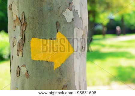 Bright arrow on tree outdoors