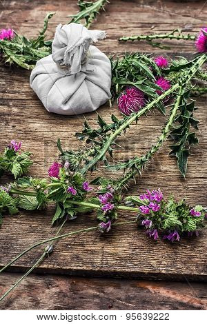 Cut Flowers Prickly Thistle