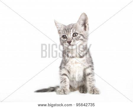 Small Gray Kitten