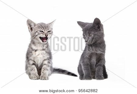 Small Gray Cats