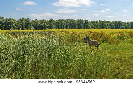Foal running in a field with wild flowers in summer