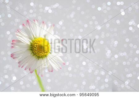 Daisy Flower On A Sparkling Bokeh