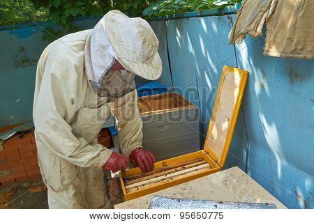 Beekeeper Takes Out Frame