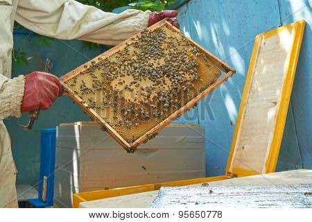 Beekeeper Shows Frame