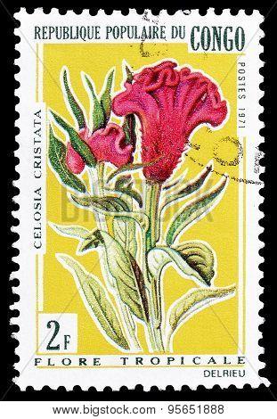 Congo 1971