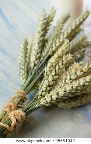 Two Bunches Of Grain On Light Blue Table