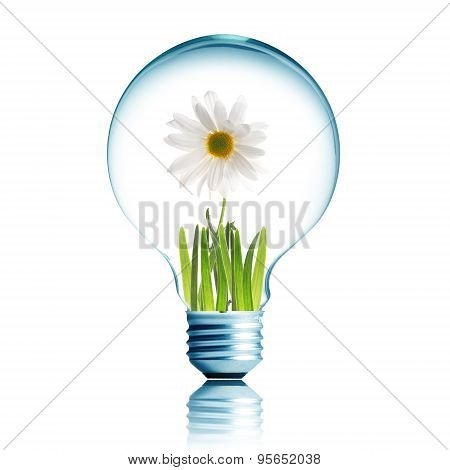 Light Bulb With Plant Growing