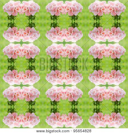 Bicolor Geraniums Seamless Pattern Background