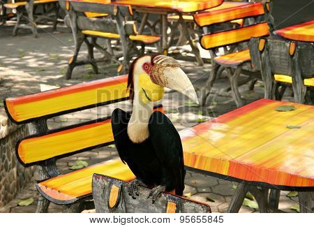 Wild Toucan Sitting On The Back Of A Wooden Chair In A Summer Cafe