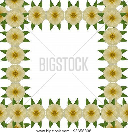 Zinnias Flower Frame Isolated On White Background