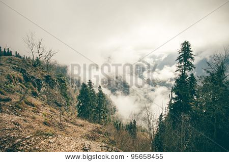 Coniferous Forest with cloudy Mountains Caucasus