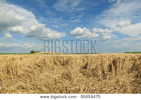 Agriculture, Wheat Harvest, Damaged Field