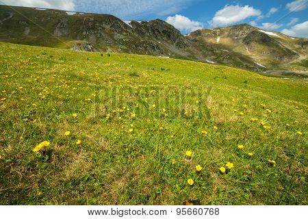 Pasture With Flowers Near The Mountains