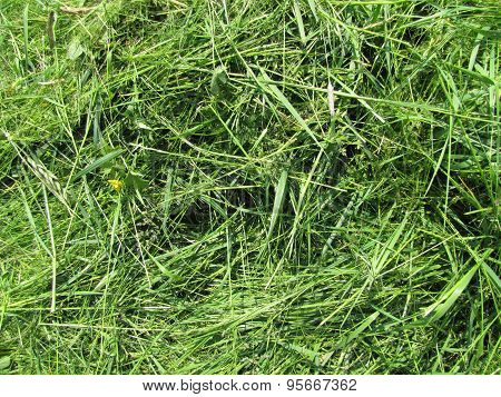 Photo Of Long Grass Texture
