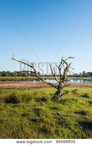 Lop-sided Dead Tree In A Nature Reserve