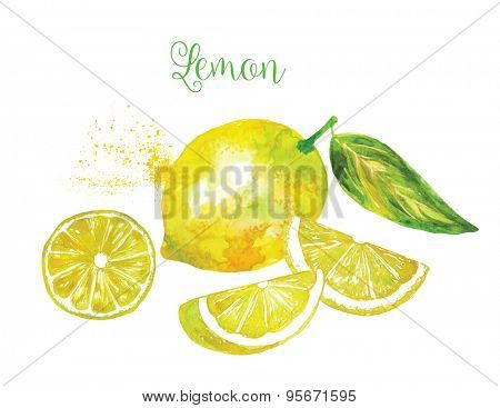 Whole Lemon and his Sliced Segments Isolated on White Background. Watercolor Vector Illustration.