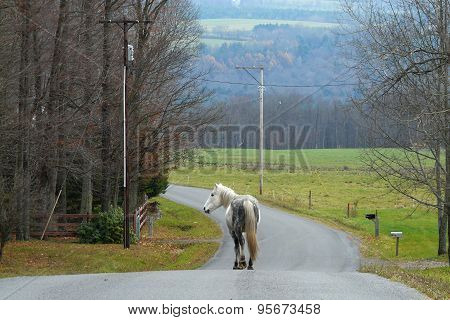 Horse walking down the middle of a road