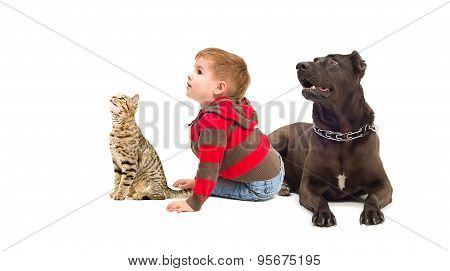 Curious boy, a dog and a cat