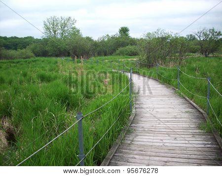 Boardwalk Through The Wetland