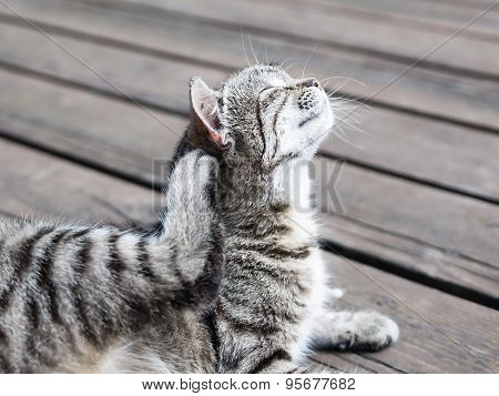 Cat enjoying scratching itself in soft colours