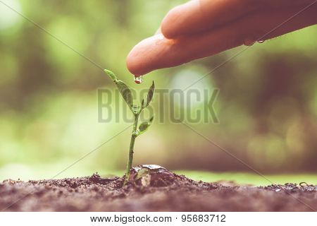 Nurturing and growing baby plant seedling