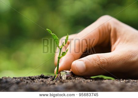 growing and nurturing baby plant seedling