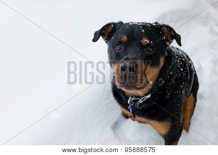 Dog Sitting In The Snow