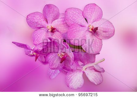 Beautiful Purple Orchid Phalaenopsis On Natural Background
