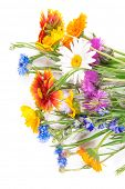 stock photo of wildflower  - Closeup bright wildflowers on white background - JPG