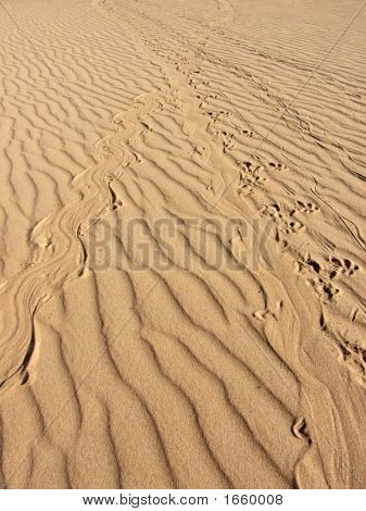 Wildlife Tracks In The Sand