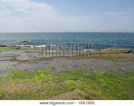 Sea And Horizon
