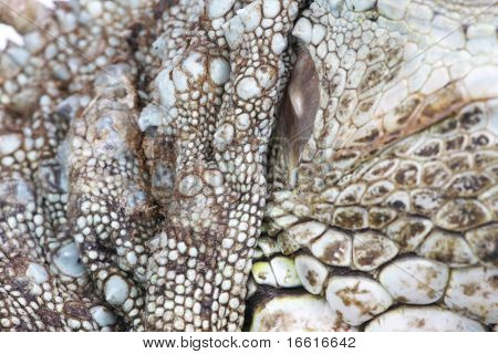 a close up shot of the scales of the iguana