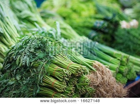 Macro of green leaves