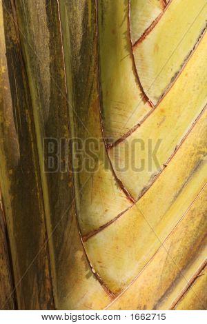 Cu Of Palm Trunk