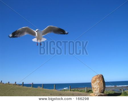 The Rock And The Seagull