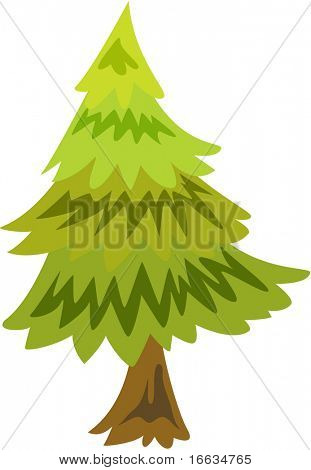 illustration of coniferous tree on white