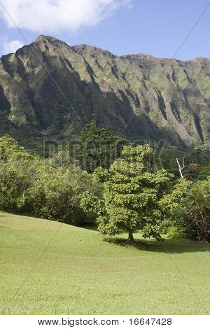 Valley By The Ko'olau Mountains On Oahu