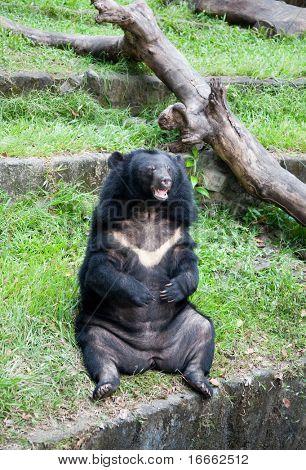Black Bear In The Zoo