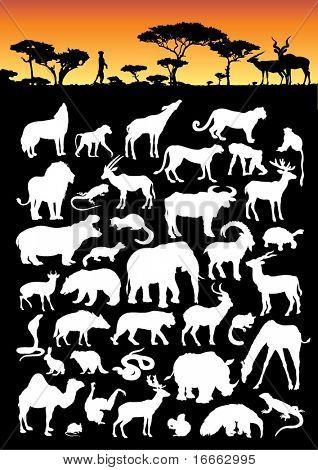 Land Animal Collection