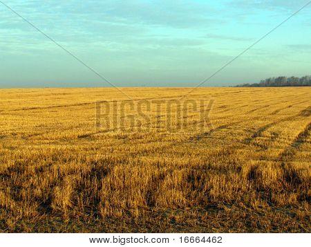 Exibição dramática de campos de trigo em tempo tempestuoso