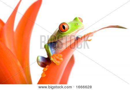 Frog On A Plant